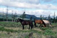 Лошади Буксунды в долине Эликчана