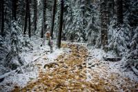 Осенний таганай, челябинская область - Андрей Linch