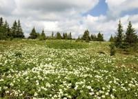Весна на горном плато. Южный Урал - Александр Кедров