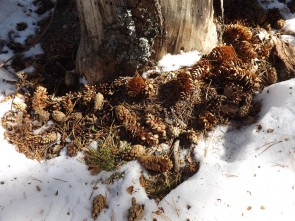 Маленькие оазисы весны в царстве Зимы. Автор: Михаил Латышев