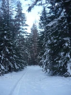 Нас встретил заснеженный лес. Автор: Дмитрий Латышев