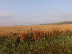 В сентябре поля над Чусовой порыжели.. Автор: Михаил Латышев