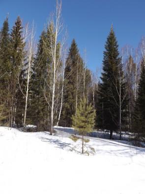 Март – лучшее время для зимних путешествий на Урале.. Автор: Михаил Латышев