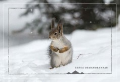 Открытки с животными Урала