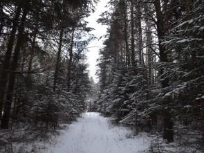 Старая дорога от Волынов к Чусовой.. Автор: Татьяна Латышева