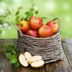 Яблочный спас в Нижней Синячихе