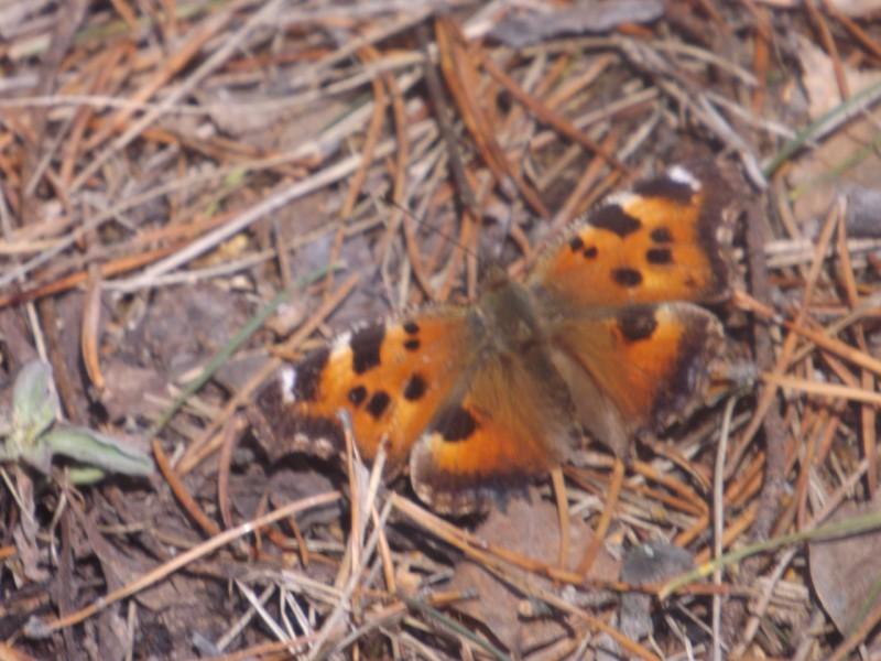 Над молодой травой летали первые бабочки.. Автор: Татьяна Латышева