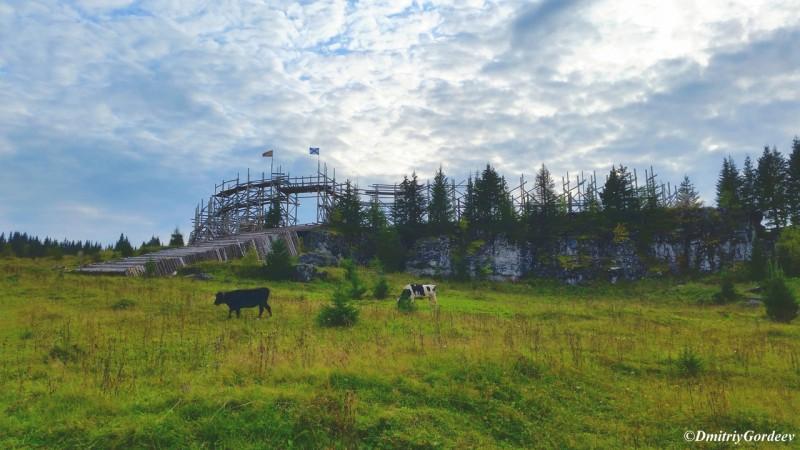 Коровы на фоне крепости п. Усьва. Автор: Дмитрий Гордеев