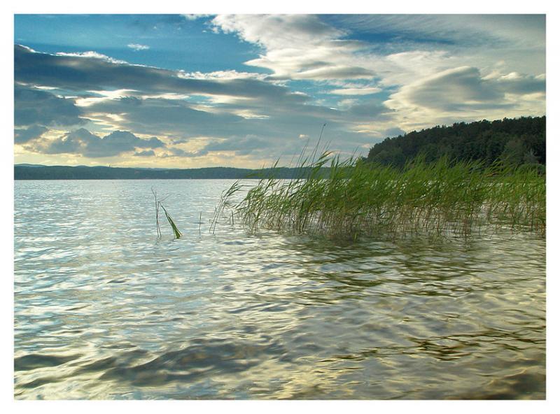 Озеро Еловое. Автор: не известен