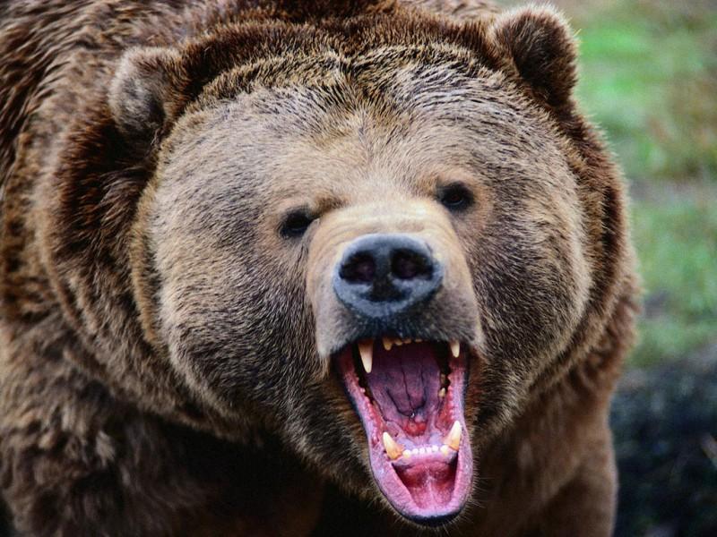медведь Монорага. Автор: не известен