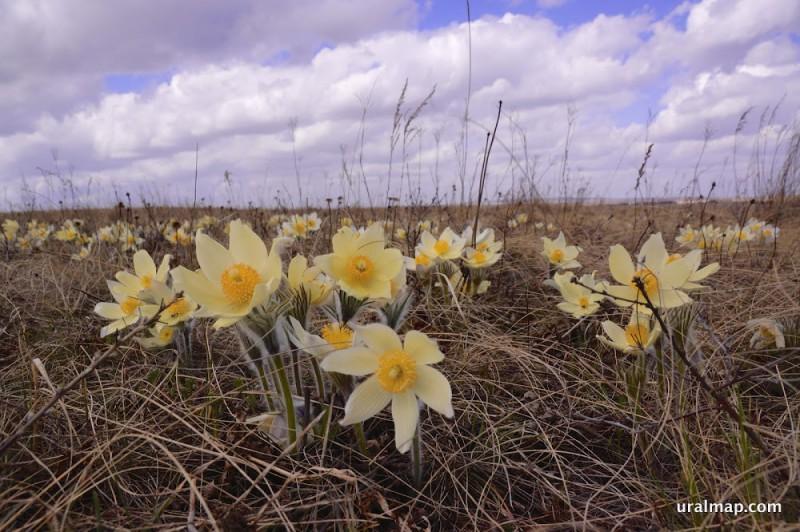 Весна в степи, окретности Варны. Автор: Александр Селищев
