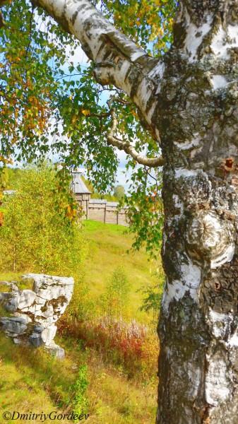 Береза, останец, стена п. Загубашка. Автор: Дмитрий Гордеев