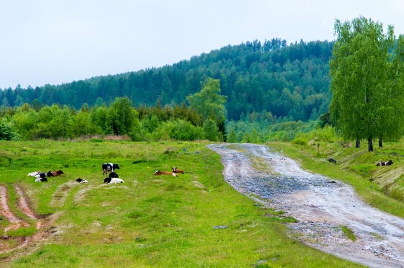. Дорога на Карандаш оказалась очень разбитой, вся в грязи и лужах, из-за того, что всю неделю шли дожди. Автор: Константин Теличко