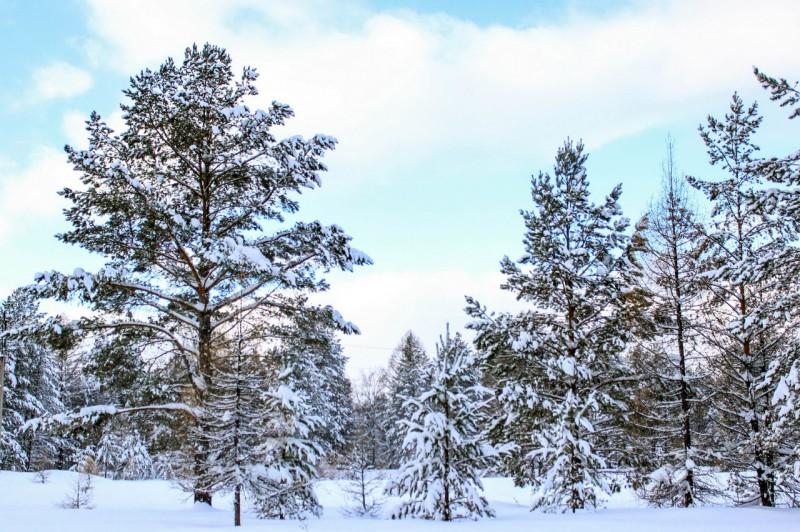 Зимний лес. Окрестности Шемахинской пещеры. Автор: Катерина Панина (Книпенберг)