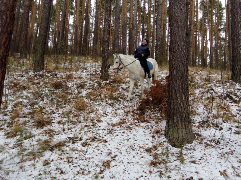 Встреча в лесу. Автор: Марина Юровских