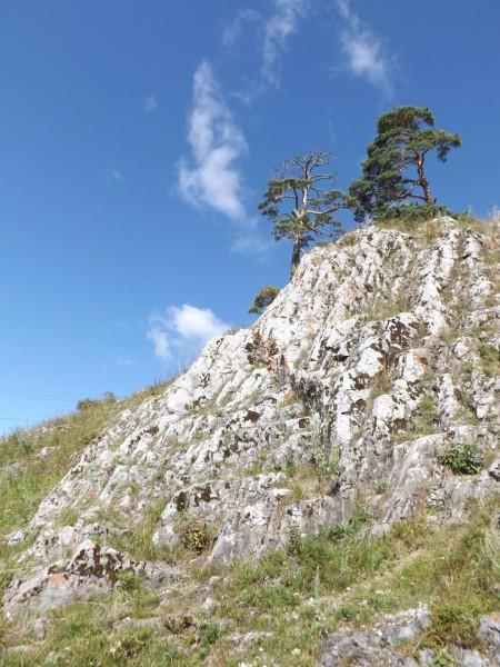Кукушкин – костёр каменный!. Автор: Михаил Латышев