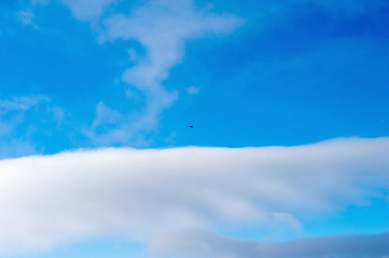 Высоко в небе над нами парила большая птица. Автор: Константин Теличко