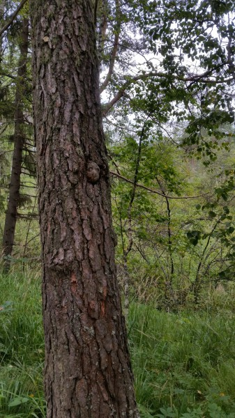 14 августа 2018 года – Дух леса, природный парк Оленьи ручьи. Автор: Дмитрий Гордеев