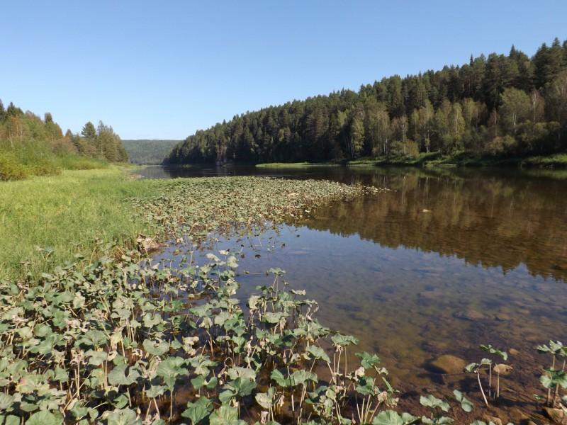 Чусовая у деревни Пермяковой. Автор: Дмитрий Латышев