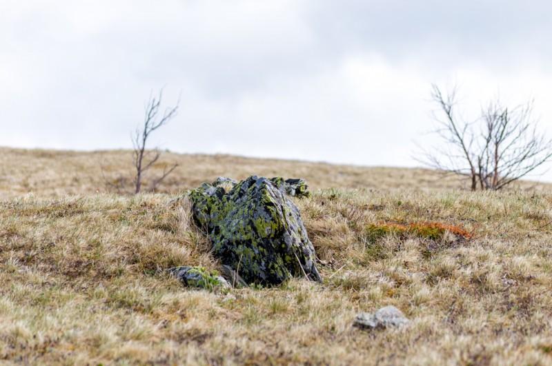 Тундровое плато Нургуша. Автор: Константин Теличко