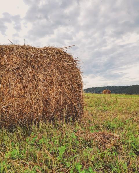 Тюки на поле, по дороге в Суксун. Автор: Антон Осокин