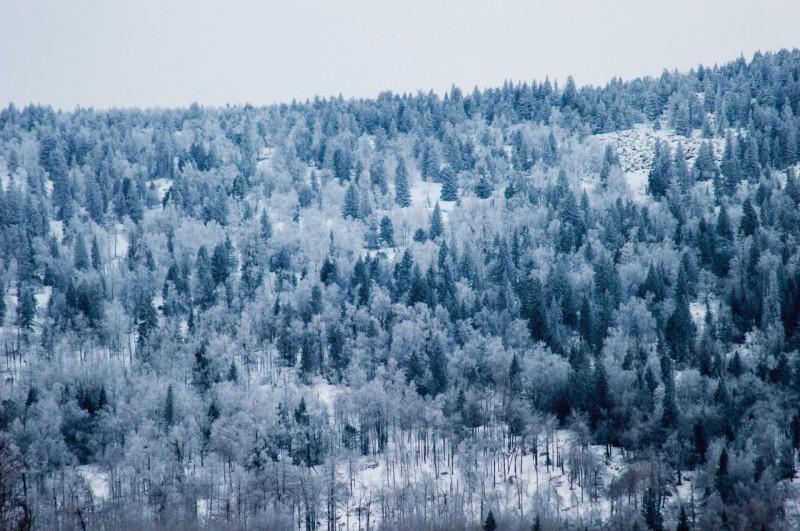 Зимний лес. Автор: Константин Теличко