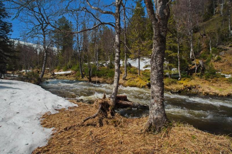 Уже в лесополосе появился снег. Автор: Евгений Жаравин
