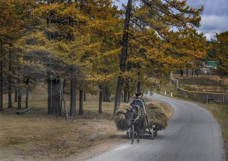 Осенние хлопоты. Деревня Ургун. Автор: Ирина Аблеева