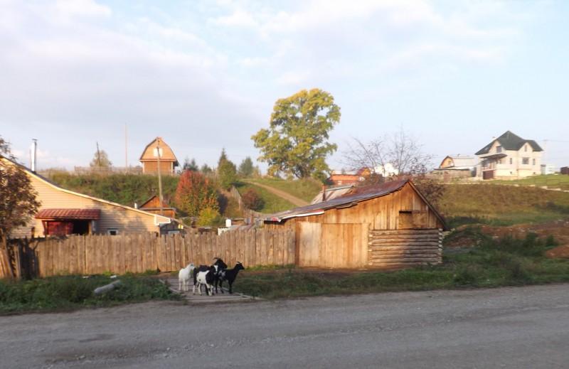 Утро в деревне Каменке.. Автор: Михаил Латышев